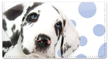 Great Dane Pup Checkbook Covers