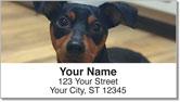 Cute Cat & Dog Address Labels