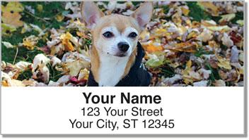 Chihuahua Address Labels