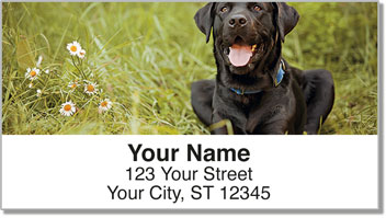 Black Lab Address Labels
