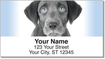 Black Lab Pup Address Labels