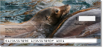 Sea Lion Checks