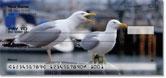 Seagull Checks