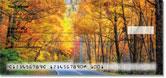 Fall Drive Checks