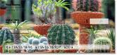 Cactus Garden Checks