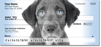 Black Lab Puppies Checks