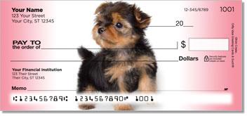 Cute Yorkie Pup Checks