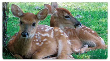 Twin Baby Animal Checkbook Cover