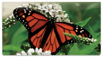 Monarch Butterfly Checkbook Cover