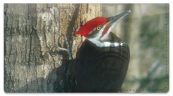 Woodpecker Checkbook Cover