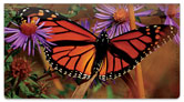 Milkweed Butterfly Checkbook Cover