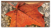 Autumn Leaves Checkbook Cover