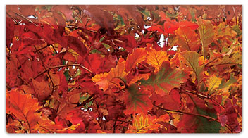 Autumn Brilliance Checkbook Cover