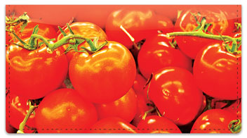 Fresh Produce Checkbook Cover