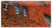 Autumn Ivy Checkbook Cover