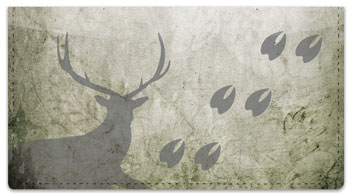 Animal Track Checkbook Cover