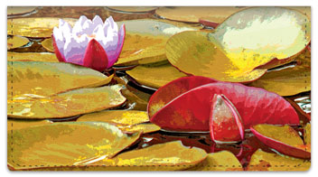 Wild Water Lily Checkbook Cover