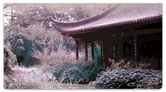 Japanese Garden Checkbook Cover