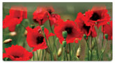 Poppy Checkbook Cover