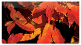 Fall Leaves Checkbook Cover