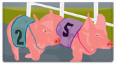 Pig Racing Checkbook Cover