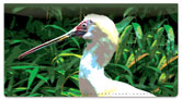 Exotic Bird Checkbook Cover