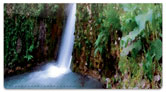 Artistic Waterfall Checkbook Cover