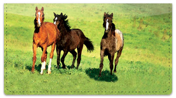 Country Horse Checkbook Cover