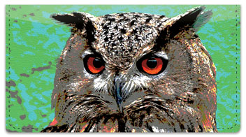 Eyes of an Owl Checkbook Cover