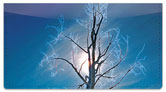 Tree Light Checkbook Cover