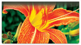 Orange Flower Checkbook Cover