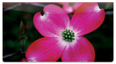 Pink Flower Checkbook Cover