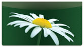 White Flower Checkbook Cover