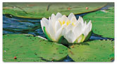 Water Lily Checkbook Cover