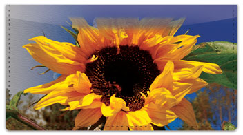 Sunflower Bloom Checkbook Cover