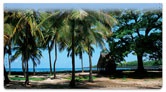 Tropical Coastline Checkbook Cover
