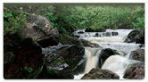 Roaring River Checkbook Cover