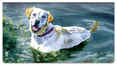 Dog Artwork Checkbook Cover