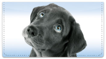 Black Lab Pup Checkbook Cover