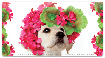 Pups in Bloom 1 Checkbook Cover