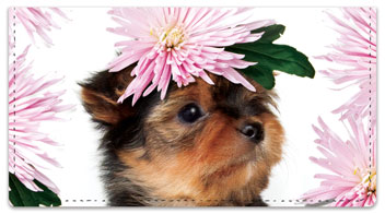 Pups in Bloom 2 Checkbook Cover