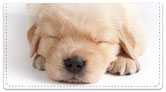 Sleepy Golden Pup Checkbook Cover