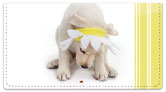 Yellow Lab Pup Checkbook Cover