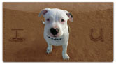 Animal Sand Scribbles Checkbook Cover