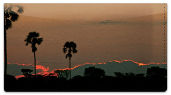 African Sunset Checkbook Cover