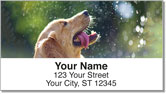 Golden Retriever Address Labels