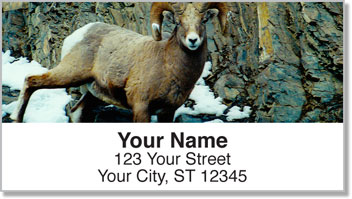 Big Horn Sheep Address Labels