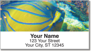Blue Ring Angelfish Address Labels