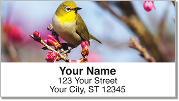 Backyard Bird Address Labels