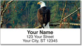 Bald Eagle Address Labels